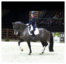 Charlotte--Valegro-in-LeMieux Low Res 1