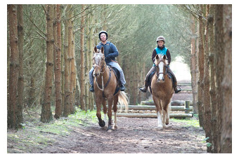 HACKING – Top 5 tips to help you enjoy your time with your horse.