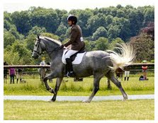 Rich dressage_test_1