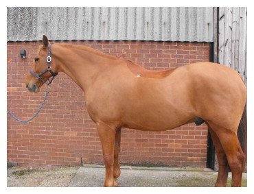 TOP TIPS ON CLIPPING YOUR HORSE IN WINTER