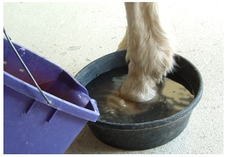 Hoof Soaking How To 2