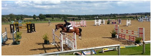 Katy horse answers today showjumping