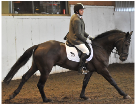 Rich neale dressage May 2016