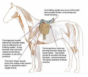 CHECK LIST - DOES YOUR SADDLE REALLY FIT YOUR HORSE? - Horse Answers Today