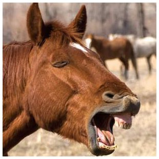 horse coughing